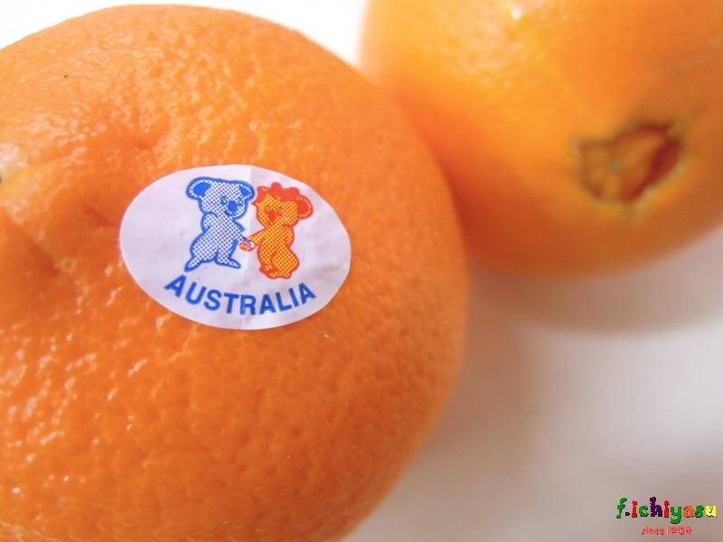 コアラのマーク ♪「ネーブルオレンジ」 Today's Fruits ♪