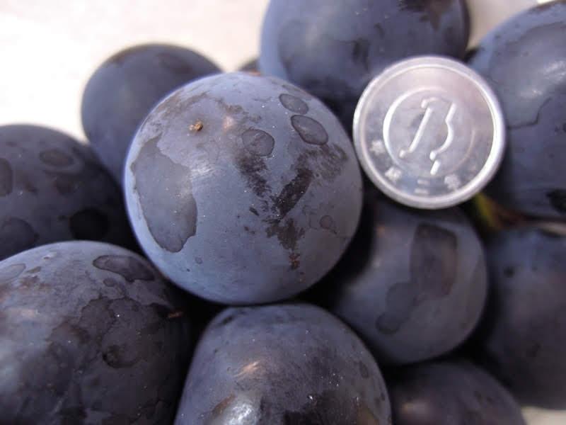 名前の無い「黒葡萄」…w Today's Fruits ♪