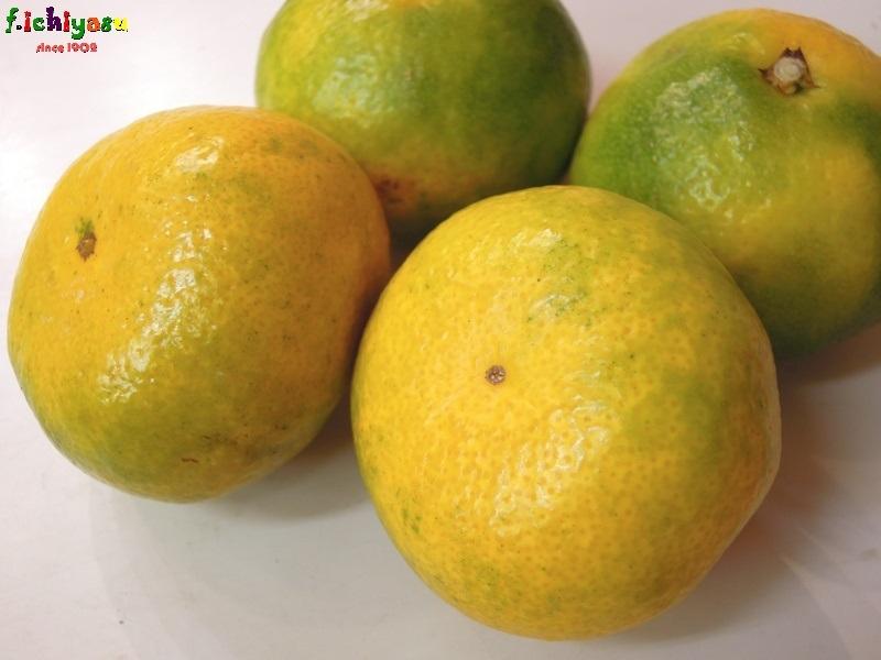 福岡・山川みかんの「日南の姫」 Today's Fruits ♪