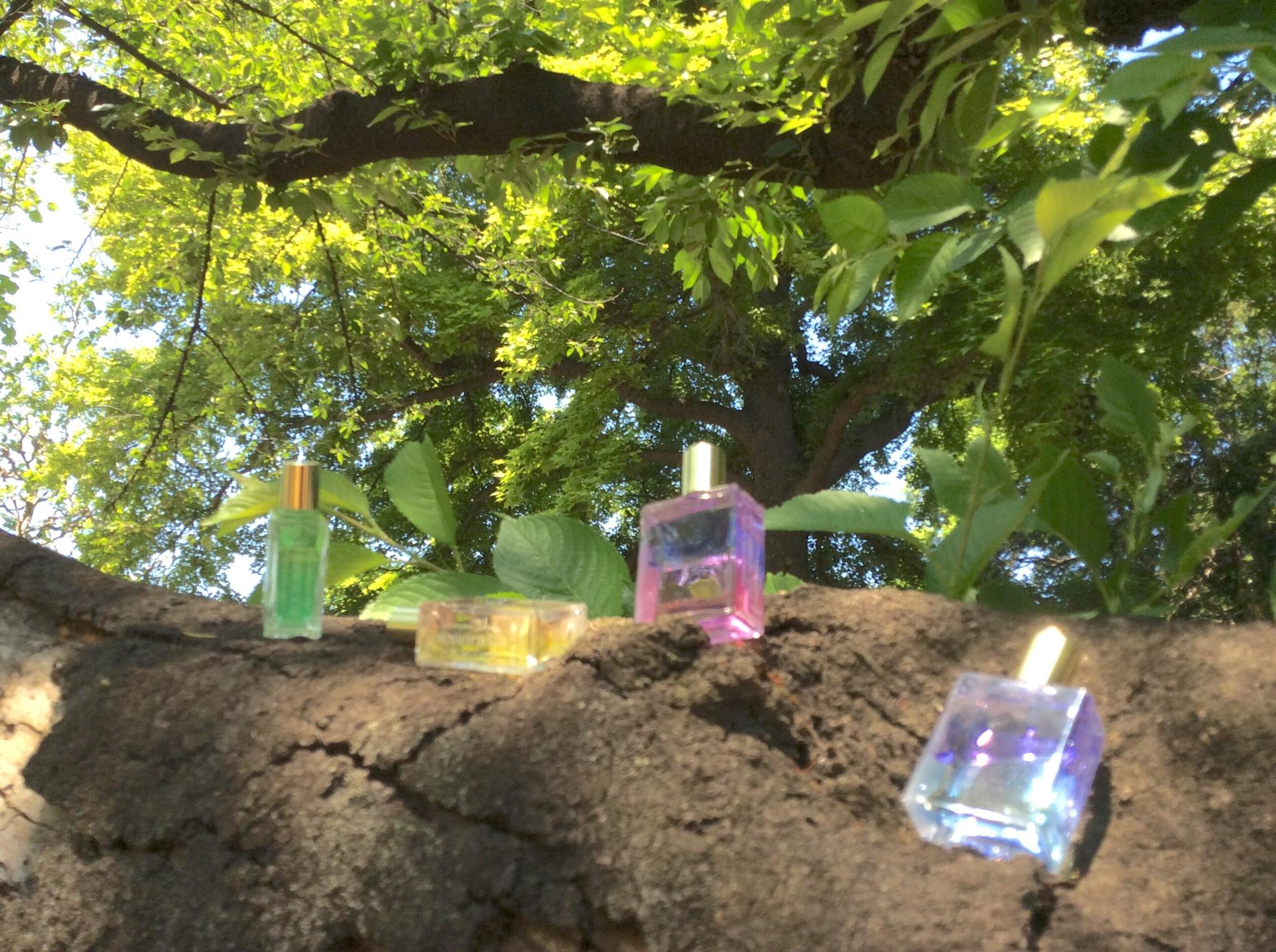 ボトル木2