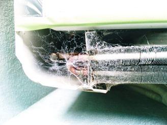室外機内のクモの巣