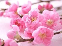 春の香りをお楽しみ下さい。