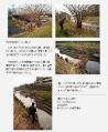 2011年2月6日 会報89号