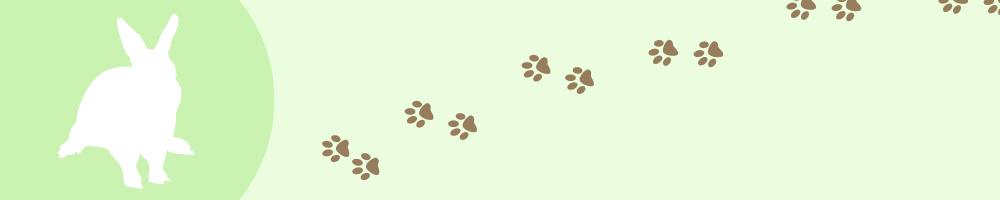 動物2_グリーン